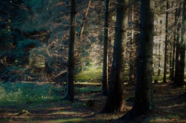 Женщины вывезли в лес общего любовника и пытались убить его пятью разными способами. Он выжил