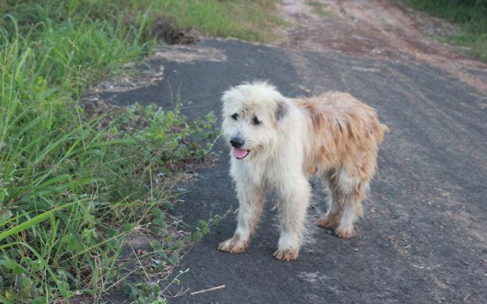 Забытая собака 4 года ждала хозяев на одном и том же месте. И у этой истории неожиданный финал (13 фото)