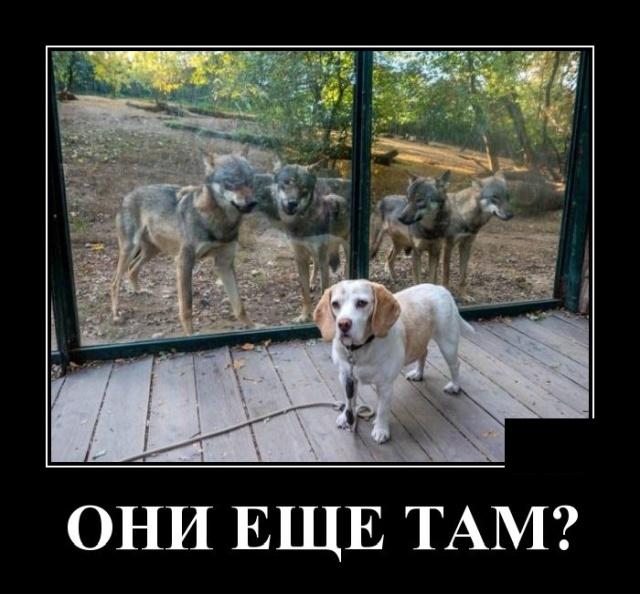 1570705607_demotivatory_10.jpg