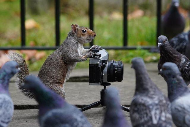 Белки-фотографы из Лондона (6 фото)