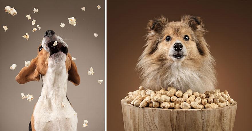 Собаки реагируют на еду (15 фото)