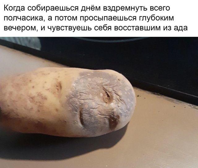 Новый мем: страдающая картошка (13 скриншотов)