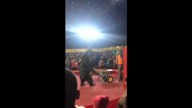 В Карелии в ходе выступления в цирке медведь напал на дрессировщика