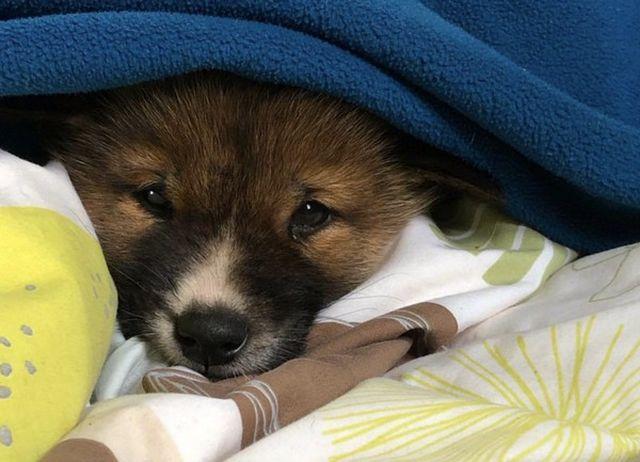Женщина из Австралии приютила щенка, а через пару месяцев ее ждал сюрприз (8 фото)