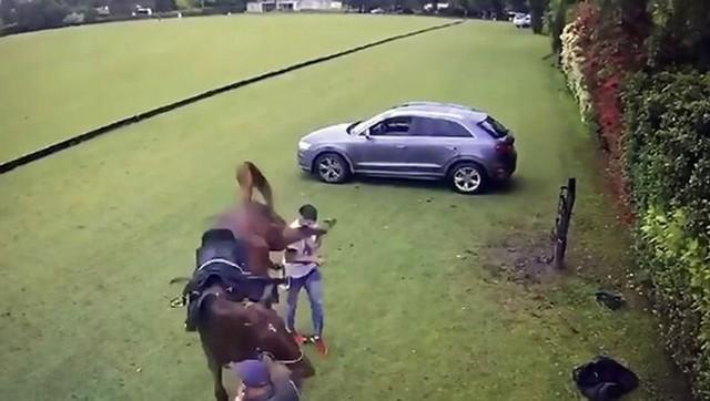 Неправильно потрогал лошадь – получил нокаут