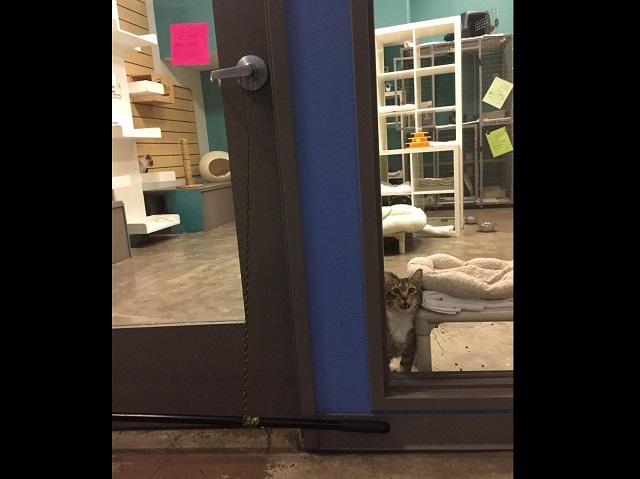 МЯУЕ, бандиты: В Техасе орудует кот-рецидивист (4 фото)