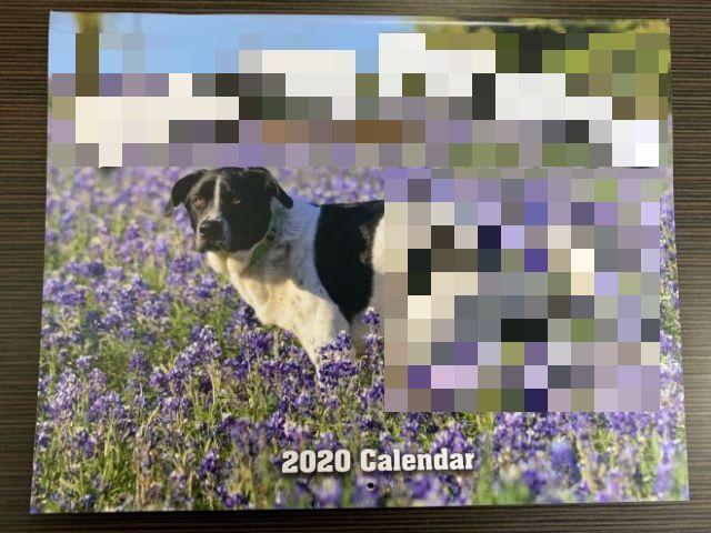 Самый странный календарь с собаками, продающийся на Гавайских островах (10 фото)