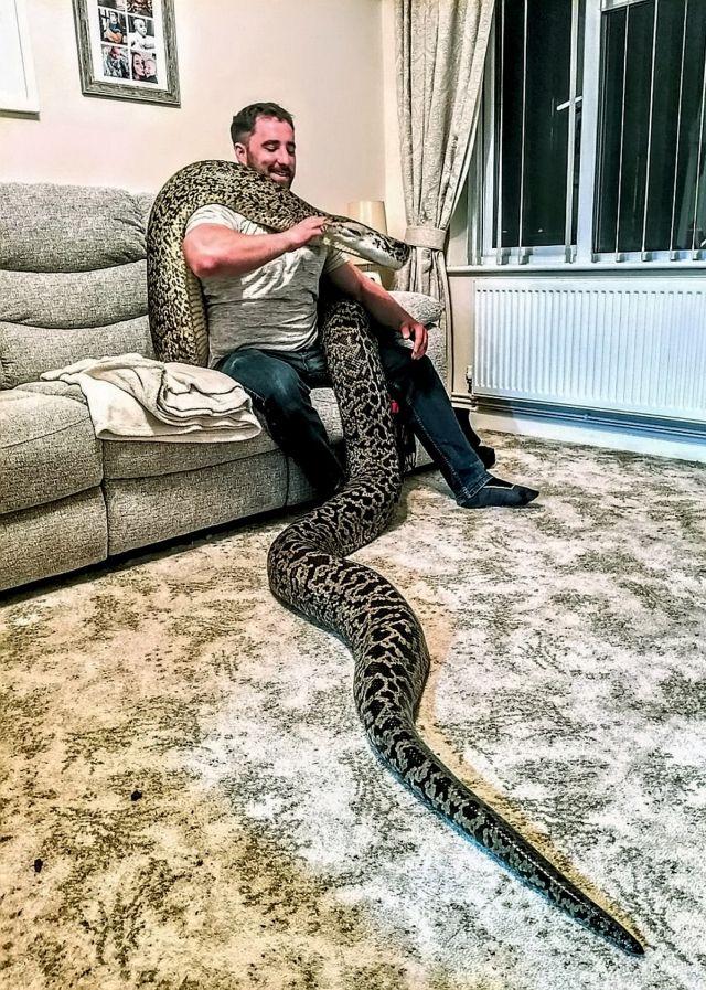 Британец купил себе маленькую змейку, но вскоре она превратилась в огромное чудище (5 фото + видео)
