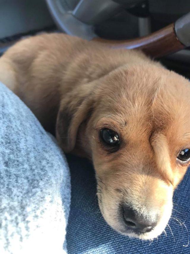 В Миссури нашли очаровательного щенка с редкой аномалией (6 фото + видео)