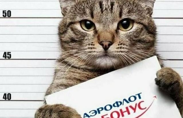 ЯМыТолстыйКот: как пользователи троллят «Аэрофлот» (18 фото)