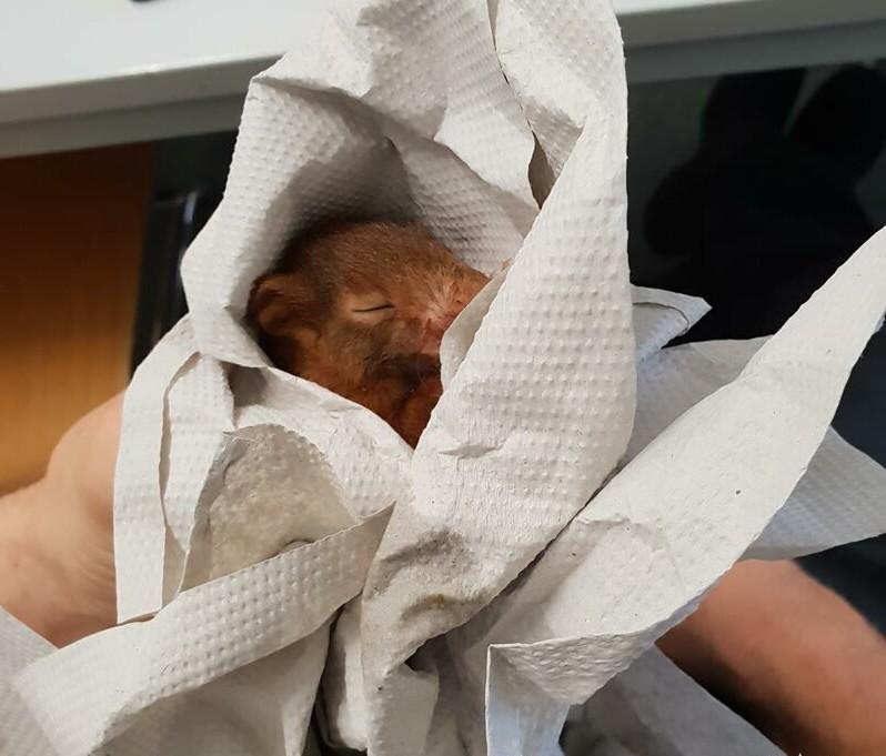 Мужчина отбился от дикого животного с помощью полиции