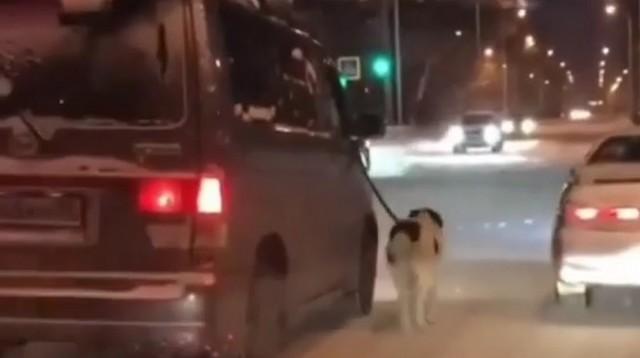 Житель Благовещенска привязал хромую собаку к машине