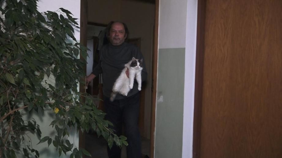 Сильный и независимый. Мужчина завел в квартире 20 котов