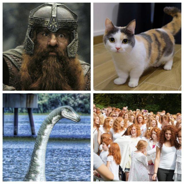 Интересные факты о Шотландии (12 фото)