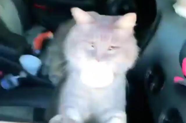 Коты устроили пати прямо в машине