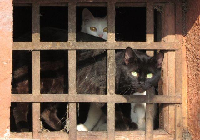 Дмитрий Медведев подписал постановление правительства, которое очень обрадует бездомных животных