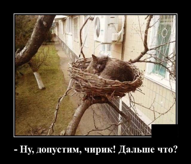 1574858938_demotivatory_10.jpg