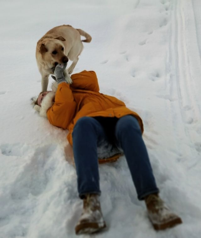 Что нужно пережить, чтобы сделать красивое, зимнее фото с собачкой (11 фото)
