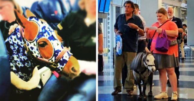 Как тебе такое, кот Виктор: в США можно перевозить пони в салоне самолета (2 фото + 3 видео)