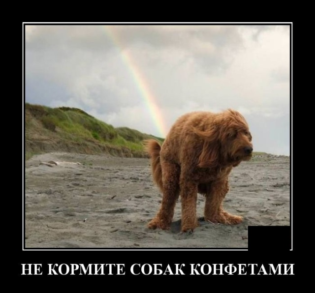 1576160223_demotivatory_15.jpg