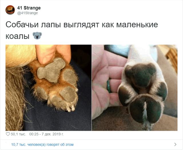 Пользователи Твиттера разгадали тайну подушечек на собачьих лапах  (11 скриншотов)