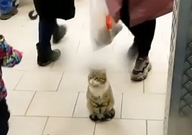 Я кот – и мне можно