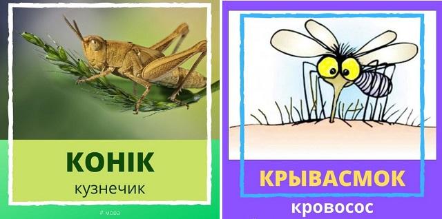 Очаровательный и забавный белорусский язык (15 фото)