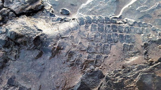 Британец гулял с собаками на пляже и случайно сделал археологическое открытие