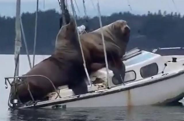 Прогулка на яхте пошла не по плану