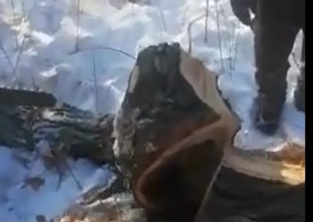 Пилили дрова, а нашли новогодний подарок