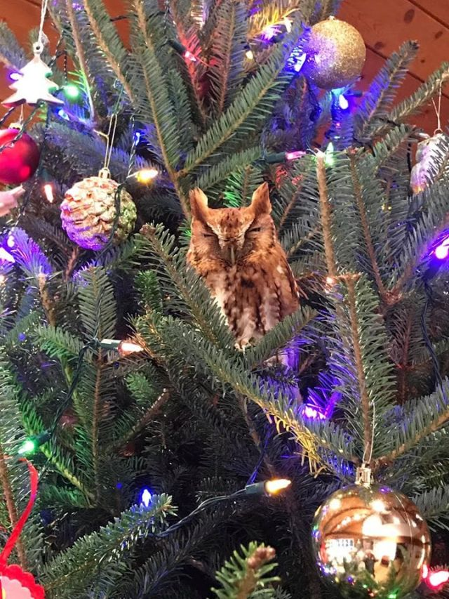 В США семья купила себе ёлку на Рождество с маленьким сюрпризом (8 фото)