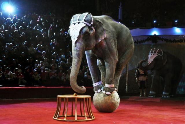 В России введут новый закон, касающийся цирковых животных