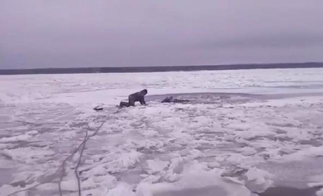 Доброты пост: в Нижегородской области местные жители спасли лосенка