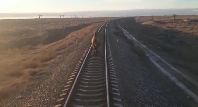 Горбатый железнодорожный работник из Астраханской области