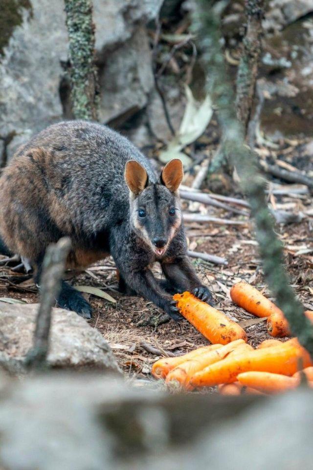 Морковный дождь в Австралии (7 фото + 2 видео)
