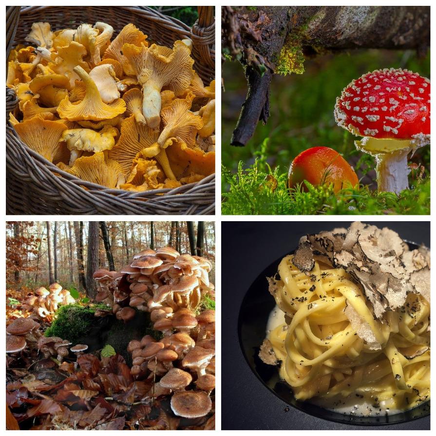 Необычные факты о грибах (14 фото)