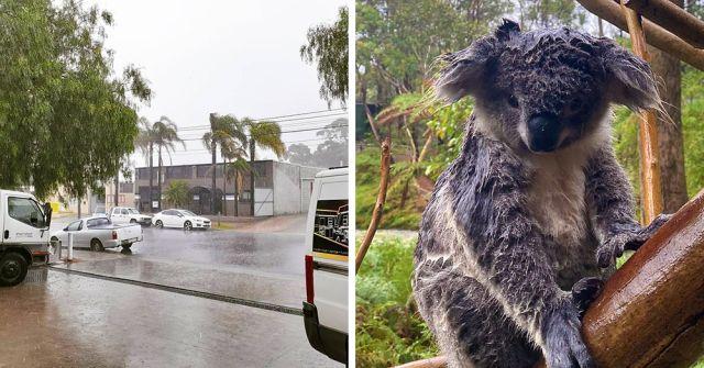 В Австралии  пошел дождь и это подарок небес: осадки потушили около 30 пожаров (7 фото + 3 видео)