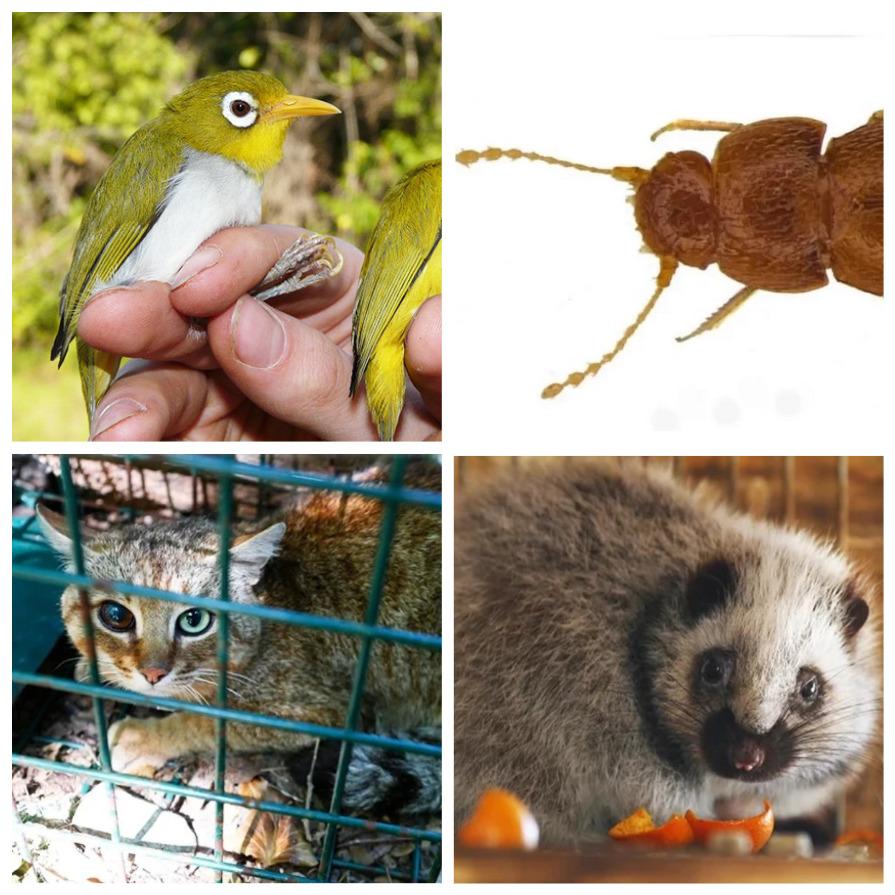 Новые виды животных, открытых в 2019 году (12 фото)