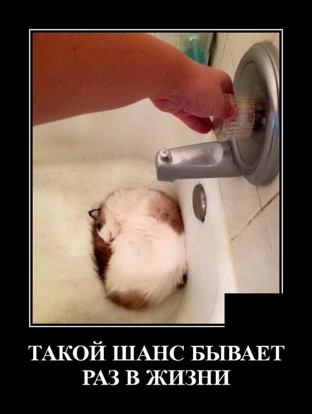 1579786279_demotivatory_17.jpg