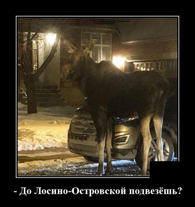 1580395147_demotivatory_11.jpg
