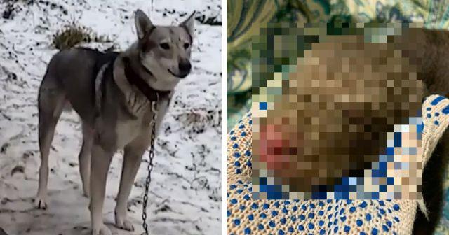 В Гатчинском районе собака нашла себе детеныша, который оказался диким зверем (5 фото)
