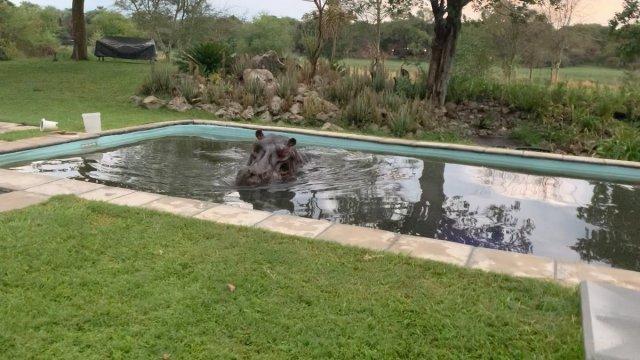 Неожиданный новогодний сюрприз в бассейне (5 фото)