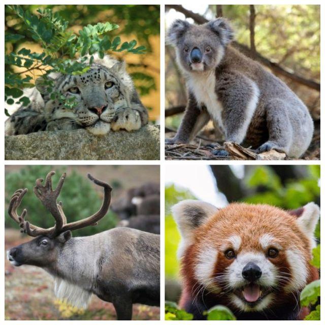 Животные, которые могут исчезнуть с лица Земли уже совсем скоро (10 фото)