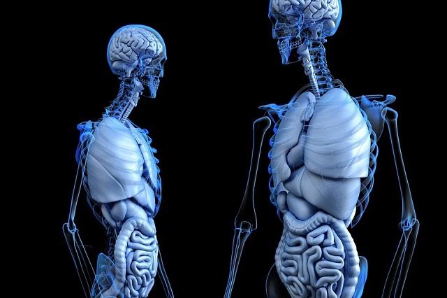 Подборка интересных фактов о человеческом теле (10 фото)