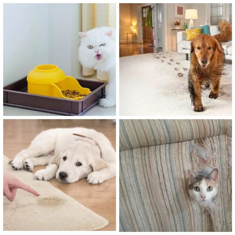 Как сохранить чистоту в доме, где живут домашние животные? (6 фото)