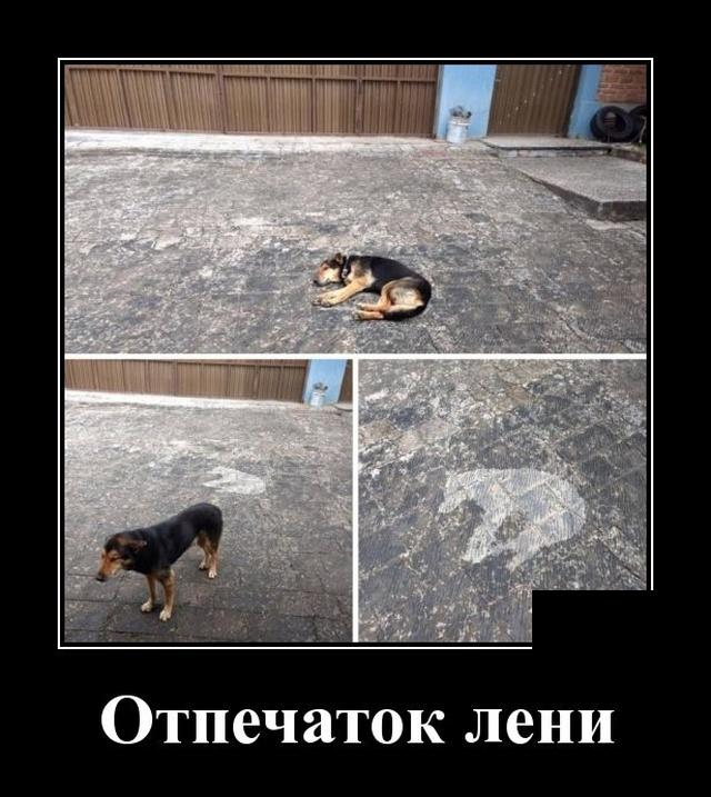1581604747_demotivatory_03.jpg
