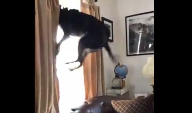 собака прыгает от радости