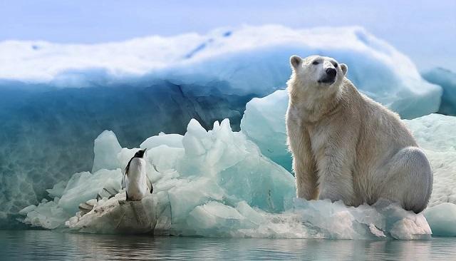 Пингвин и медведь на льдине