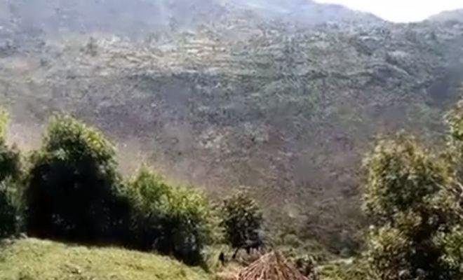 крупнейшее нашествие саранчи в Африке