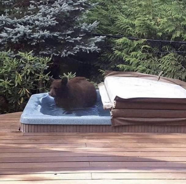 Медведь в джакузи